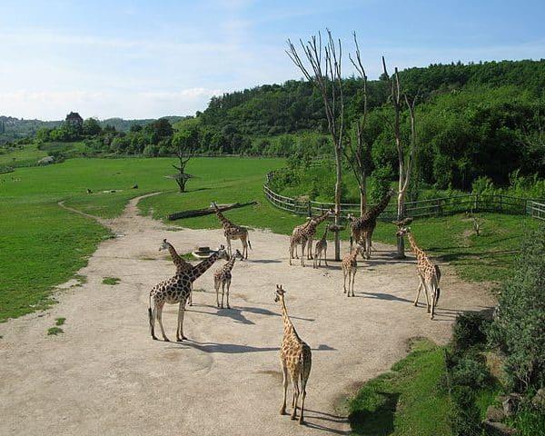 Zoo_de_Prague_2