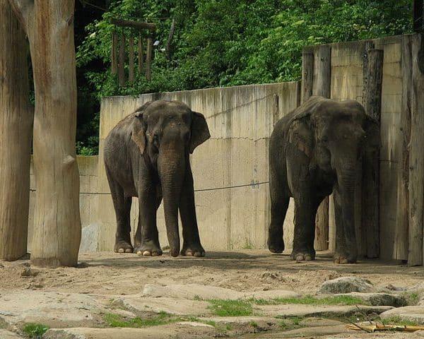 Zoo_de_Prague_5