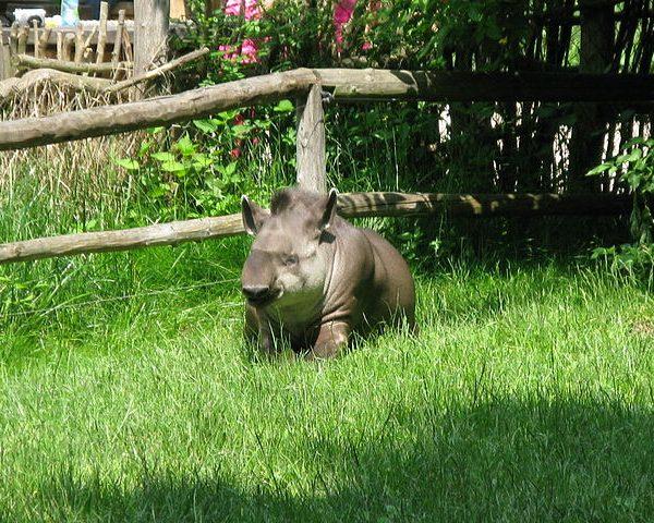 Zoo_de_Prague_6